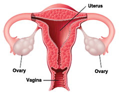 Keeping Your Ovaries After Hysterectomy - Dr.Whitted